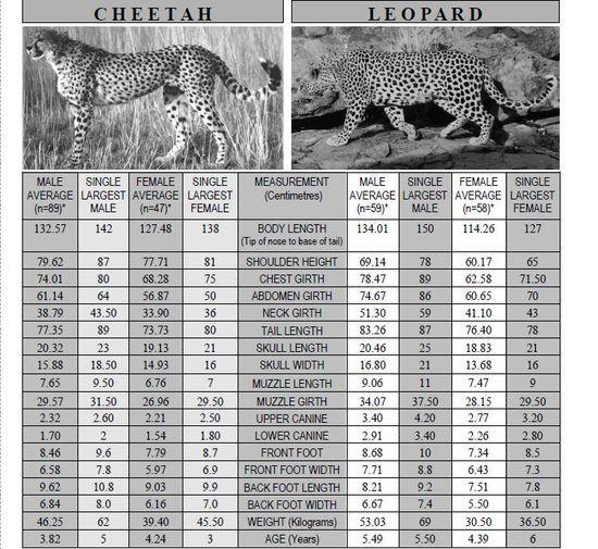 쯔양 vs 표범 누가 더 많이 먹을까? | 인스티즈