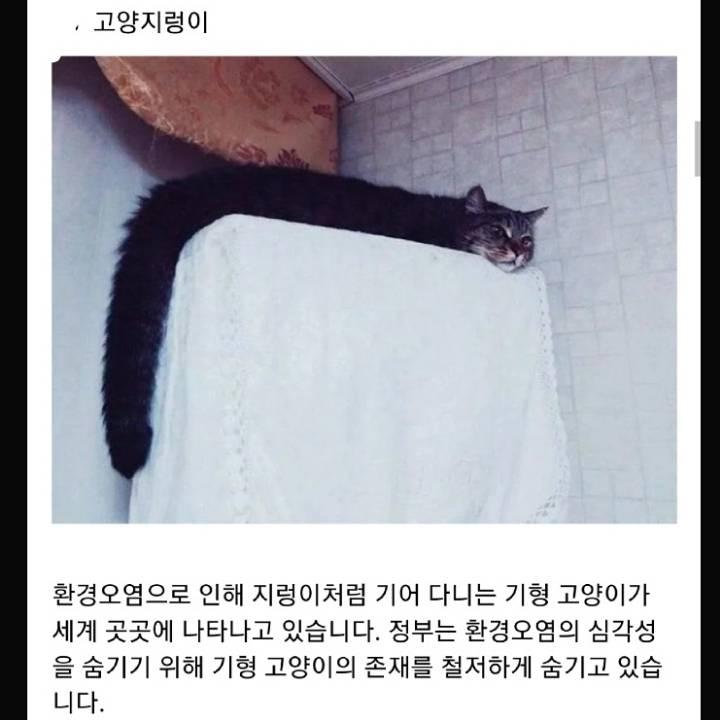 정부가 숨기는 동물의 비밀.jpg | 인스티즈