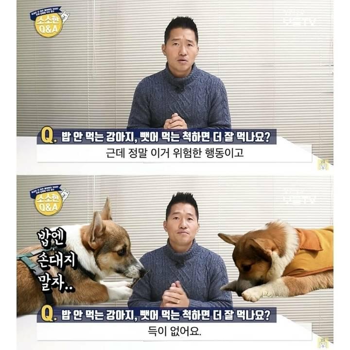밥 안 먹는 강아지 뺏어 먹는 척하면 더 잘 먹나요?.jpg | 인스티즈