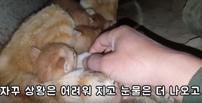 고양이를 별로 좋아하지 않는다는 유튜버..jpg | 인스티즈