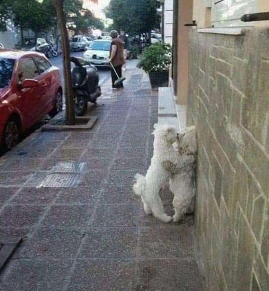 길거리에서 커플이 짐승마냥.. | 인스티즈