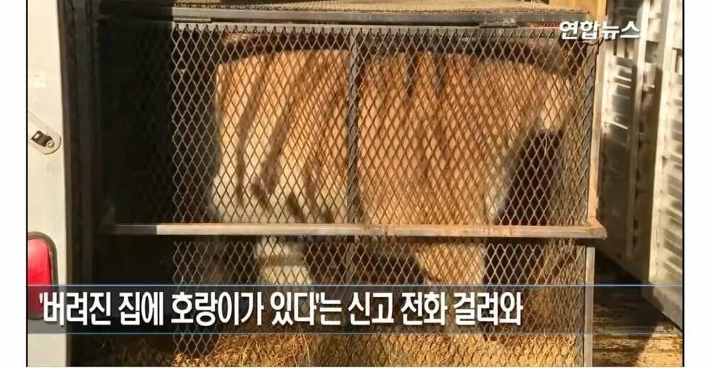 ??? : 대마초 피려다가 고양이 주운거 인증한다 | 인스티즈