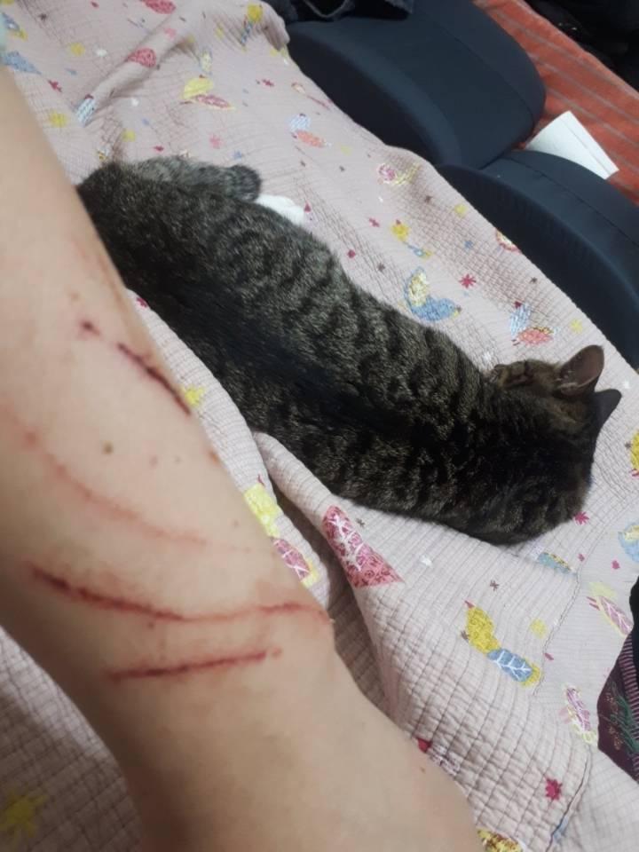 고양이랑 싸운 집사.jpg | 인스티즈