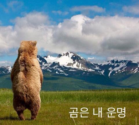 북극곰의 10개월 전후 차이 | 인스티즈