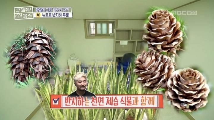 솔방울을 키우고 있는 유병재 ㅋㅋ | 인스티즈