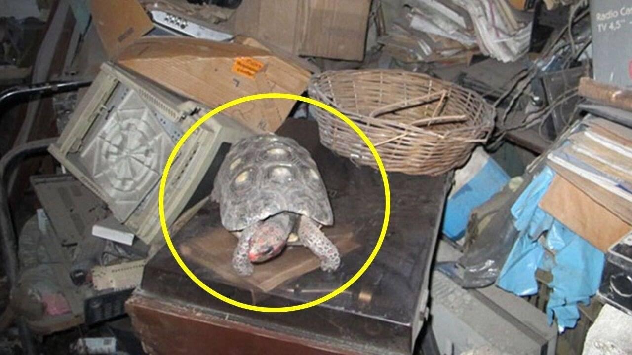 30년만에 창고에서 산 채로 발견된 거북이 | 인스티즈