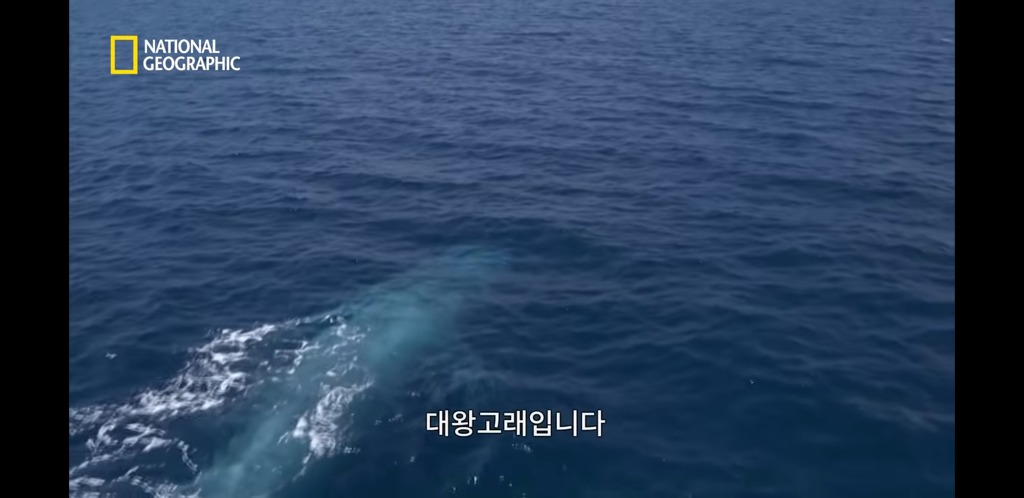 대왕고래의 위엄   인스티즈