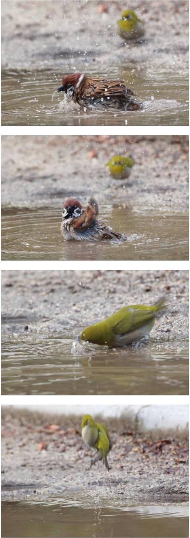 한겨울에 참새가 목욕하는거 본 동박새.JPG | 인스티즈