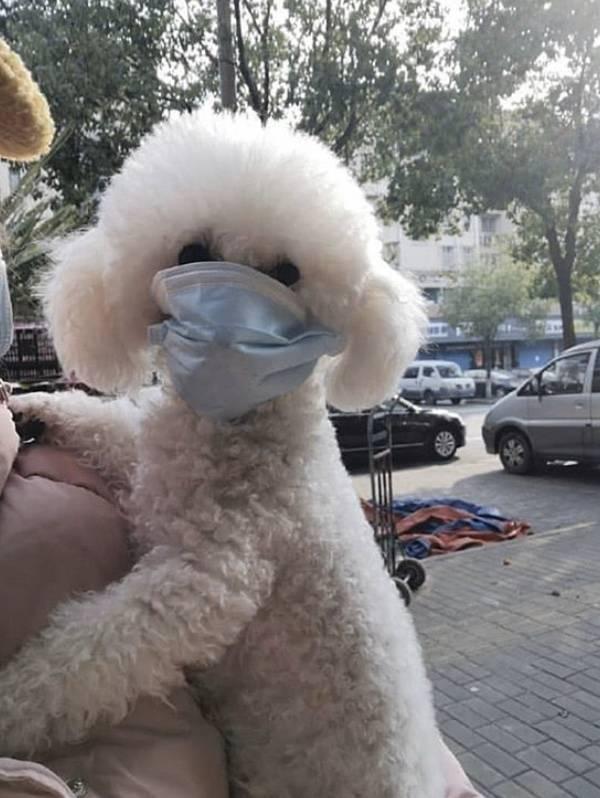 우한 폐렴 이후 중국 근황.jpg | 인스티즈