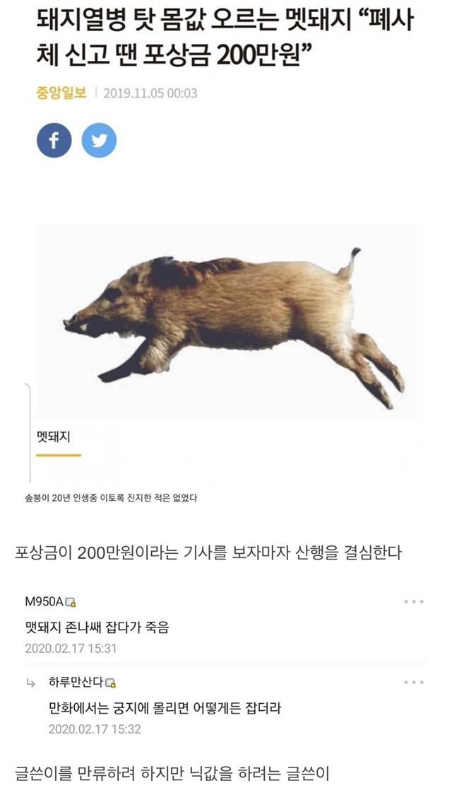 멧돼지 잡으러 산으로 간 디씨인...jpg | 인스티즈