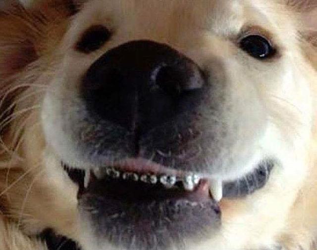 치아교정한 댕댕이.jpg | 인스티즈