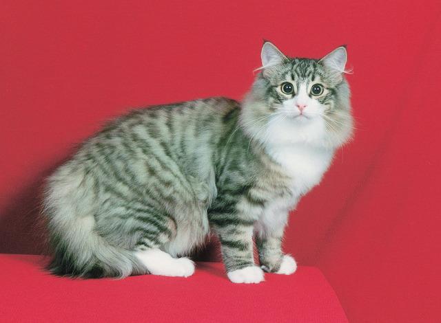 먹잇감이 없자 고양이를 노린 여우 | 인스티즈