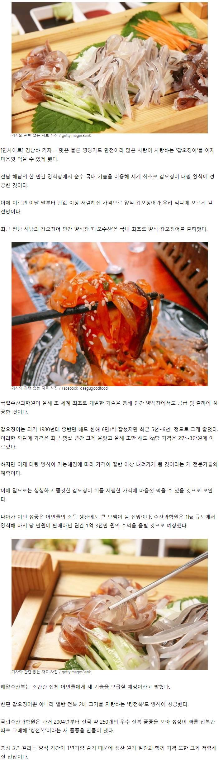 '갑오징어' 대량 양식 성공 | 인스티즈