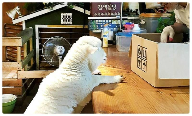??? 마블은 한국을 뭐라고 생각하는거니.jpg | 인스티즈