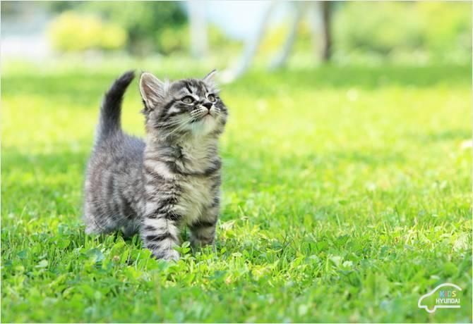 고양이 키우는 사람들 특징.jpg | 인스티즈