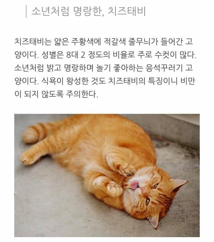 고양이 종류별 성격.jpg | 인스티즈