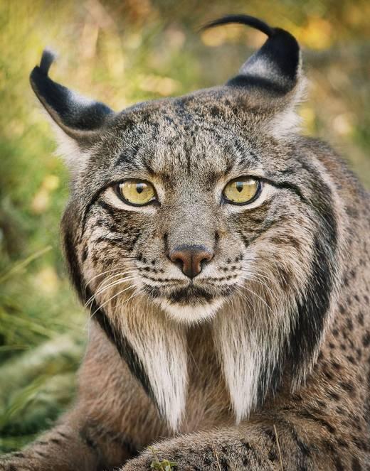 멸종위기 동물9선 | 인스티즈