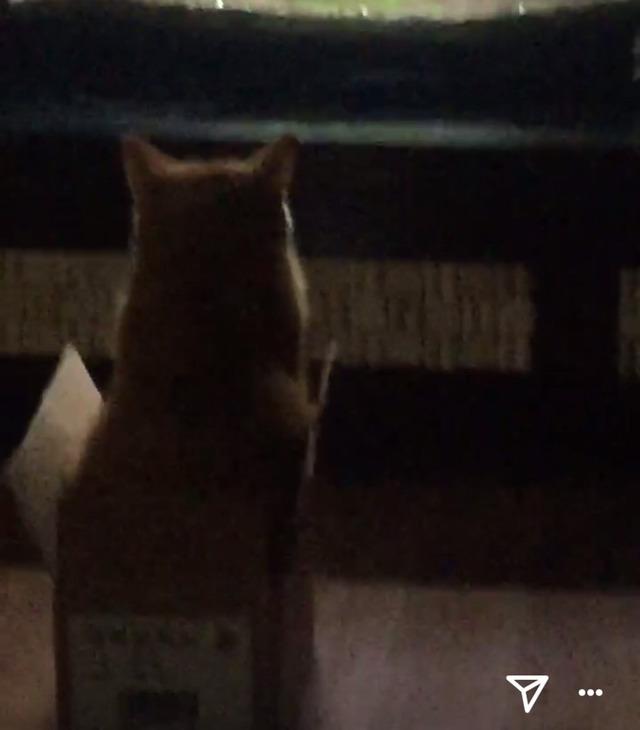 우리집 고양이 밤샜나봐 어뜨케 | 인스티즈