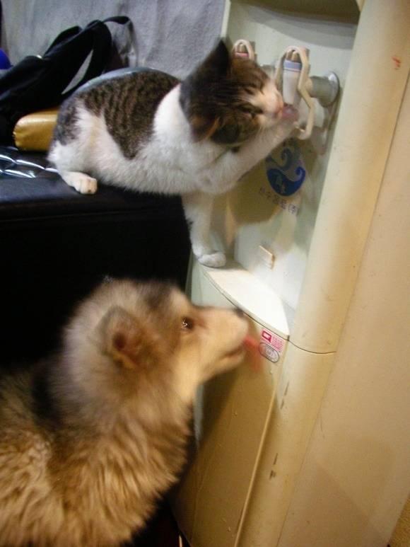 ??? : 고양이가 자꾸 물을 빼먹어서 정수기 환불하려구요 | 인스티즈