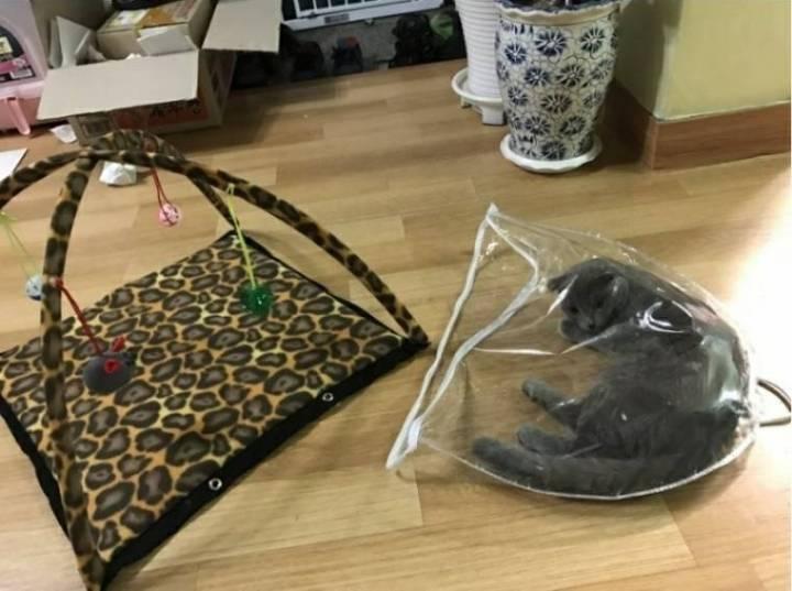 고양이용 텐트 구매 후기.JPG | 인스티즈