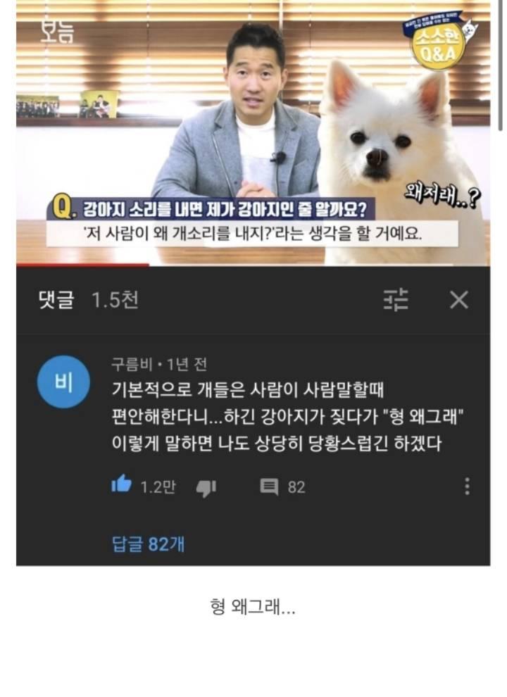 강형욱 : 개들은 사람이 사람 말을 할 때 편안해 한다 | 인스티즈