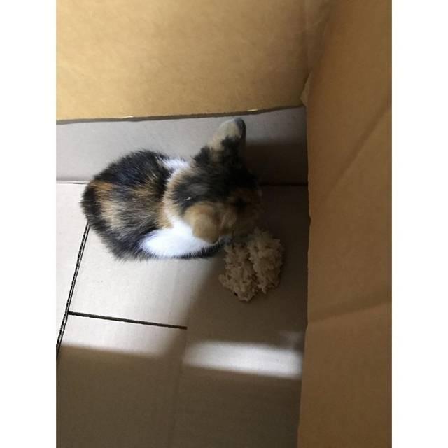 길가다 제 차로 죽일뻔한 고양이를 데려왔는데요 | 인스티즈