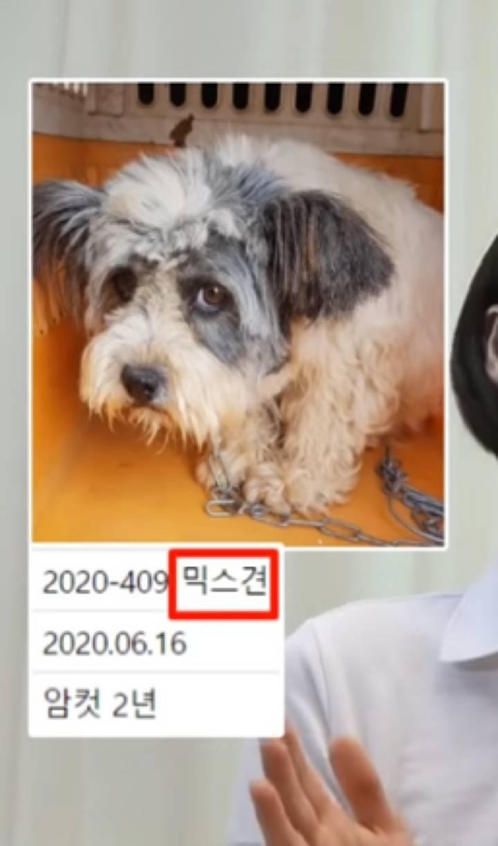 유튜버 땅끄부부가 입양한 유기견 행운이 표정 변화 | 인스티즈
