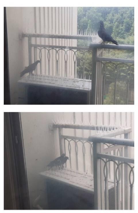 비둘기와의 전쟁중인 디씨인 | 인스티즈
