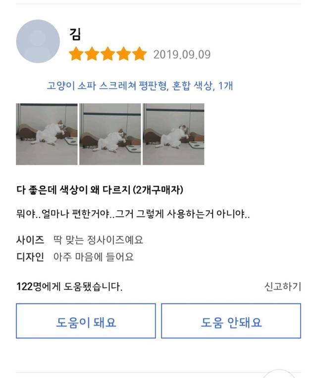 저세상 반응인 고양이 스크래치 리뷰.jpg | 인스티즈