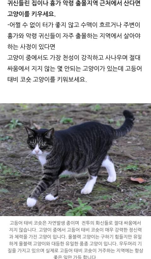 귀신 악령이 가장 싫어하는 고양이 | 인스티즈