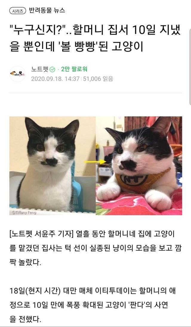 고양이 돌봐달라고 맡겼더니 동물확대한 할머니.jpg | 인스티즈