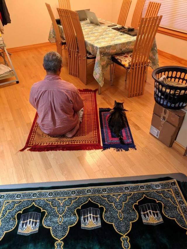 무슬림 고양이를 위한 매트 | 인스티즈