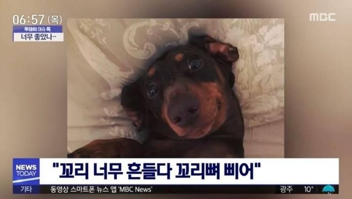코로나19로 가족들이 집에 있자 강아지가 결국... | 인스티즈