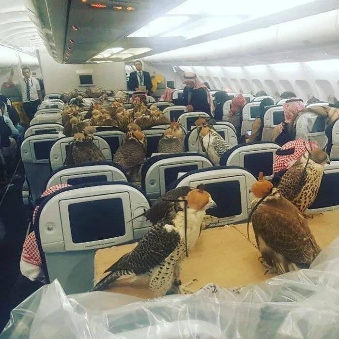 매형이 비행기 자리 80석을 예매했습니다 | 인스티즈