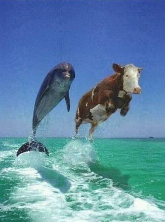 돌고래랑 송아지로 보이면 스트레스 많이받는거래요 | 인스티즈