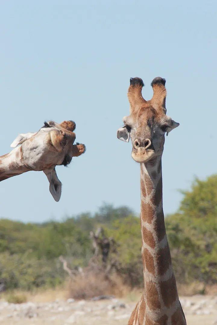 웃긴 야생동물 사진대회 2020 출품작 | 인스티즈