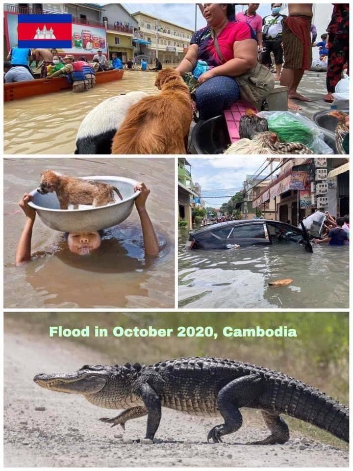 역대급 홍수에도 평정심을 잃지않는 캄보디아 사람들..jpg | 인스티즈