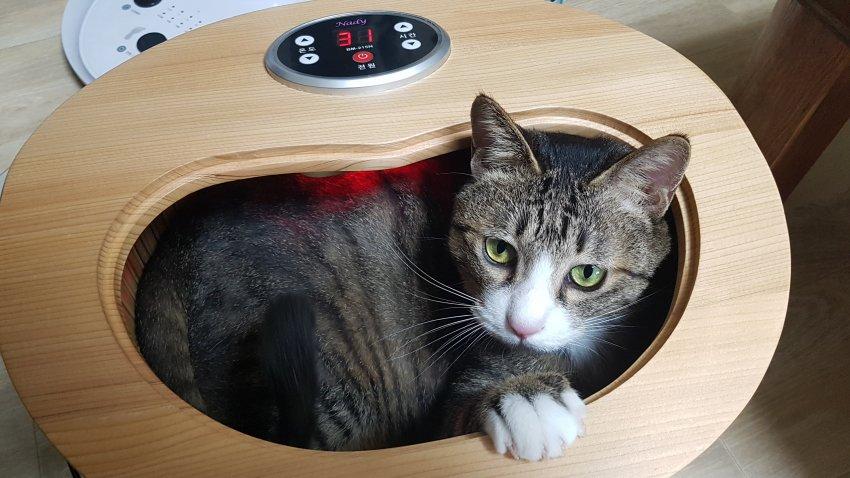 고양이 복지 최상위 아이템.jpg | 인스티즈