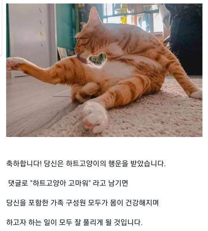 따봉도치에 이은 하트고양이 | 인스티즈