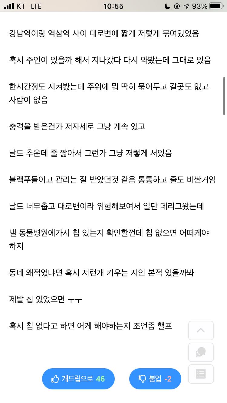 강남역 유기견 후기.jpg | 인스티즈