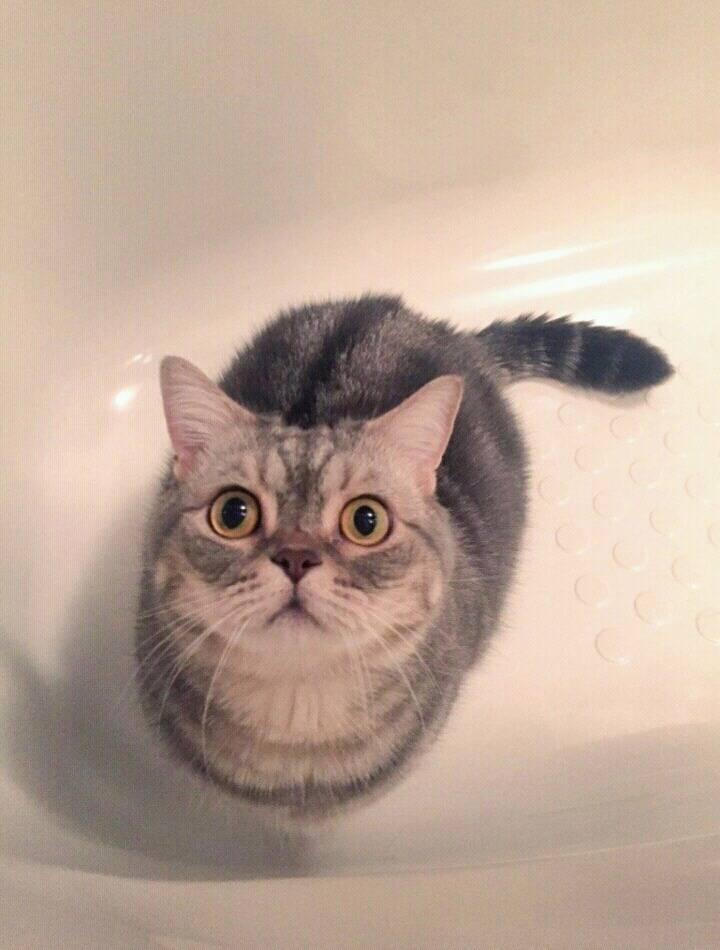 욕조 안에서 가만히 있는 고양이   인스티즈