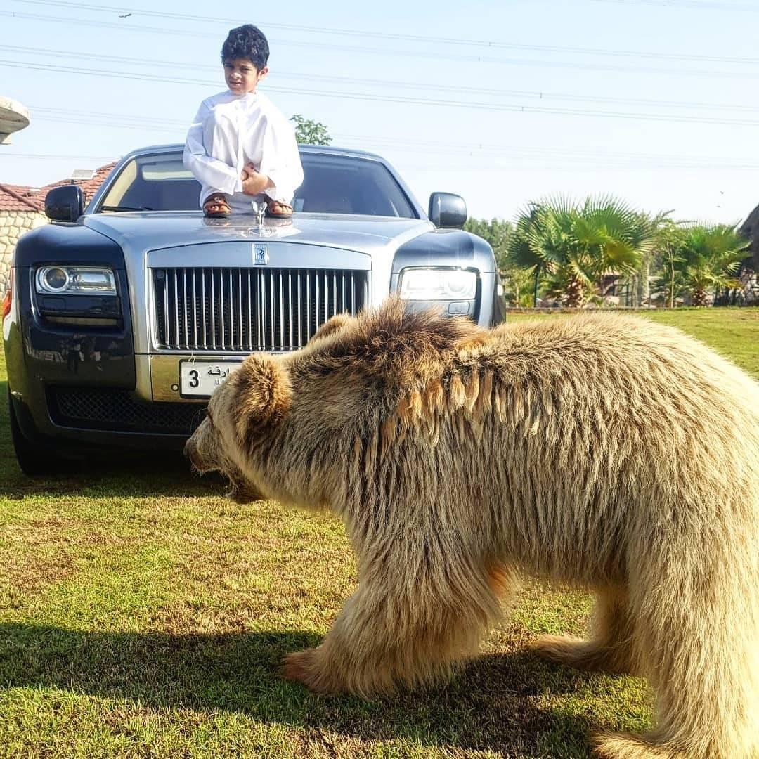 차에 스크래치 따위는 신경 안쓰는 곰 주인 아랍부자 | 인스티즈