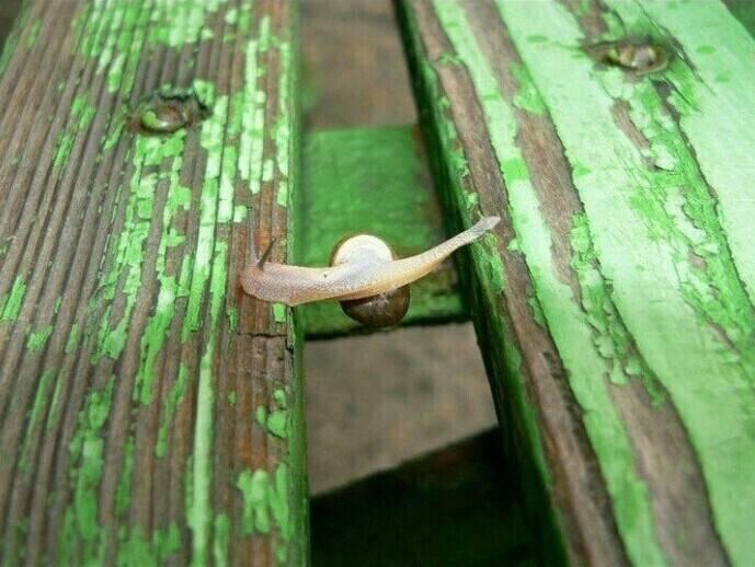 이동하다 길이 끊켰을때 달팽이 행동 | 인스티즈