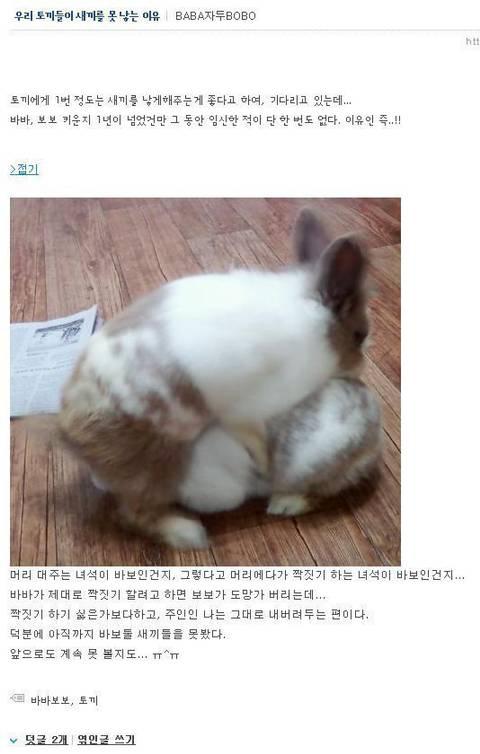 토끼부부가 아이를 갖지 못 했던 이유 .jpgg | 인스티즈