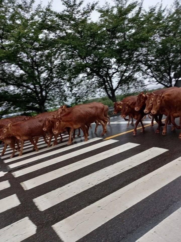 축사 무너진 소떼 근황...jpg | 인스티즈