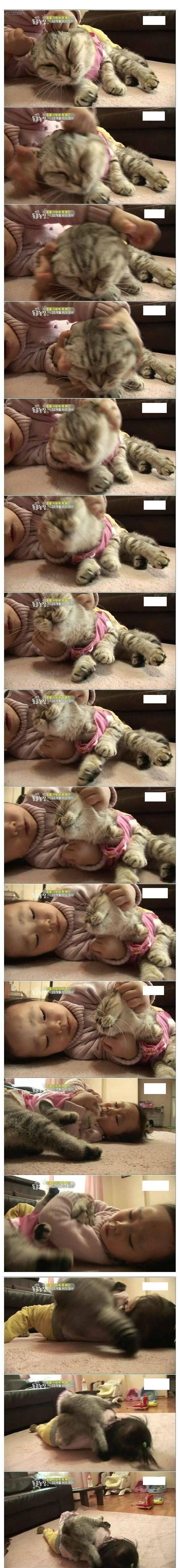고양이 인터뷰하는 제작진 | 인스티즈