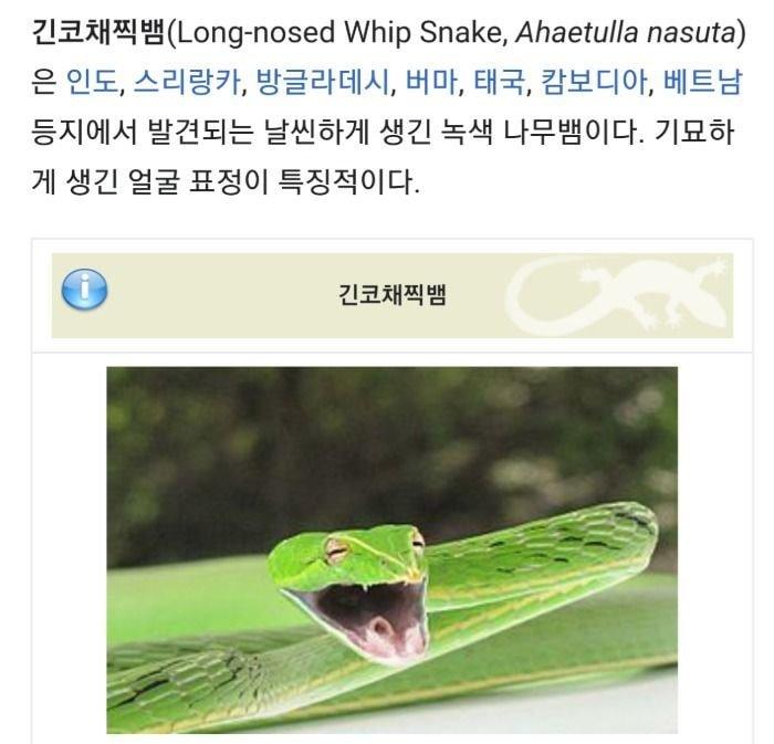 식물 줄기처럼 생긴 새끼 긴코채찍뱀들 | 인스티즈