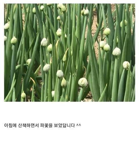 식물갤 대참사 .jpg | 인스티즈