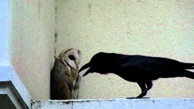 동료의 죽음을 이해하고 받아들이는 방식이 너무 똑똑해서 소름돋는다는 동물.gif   인스티즈