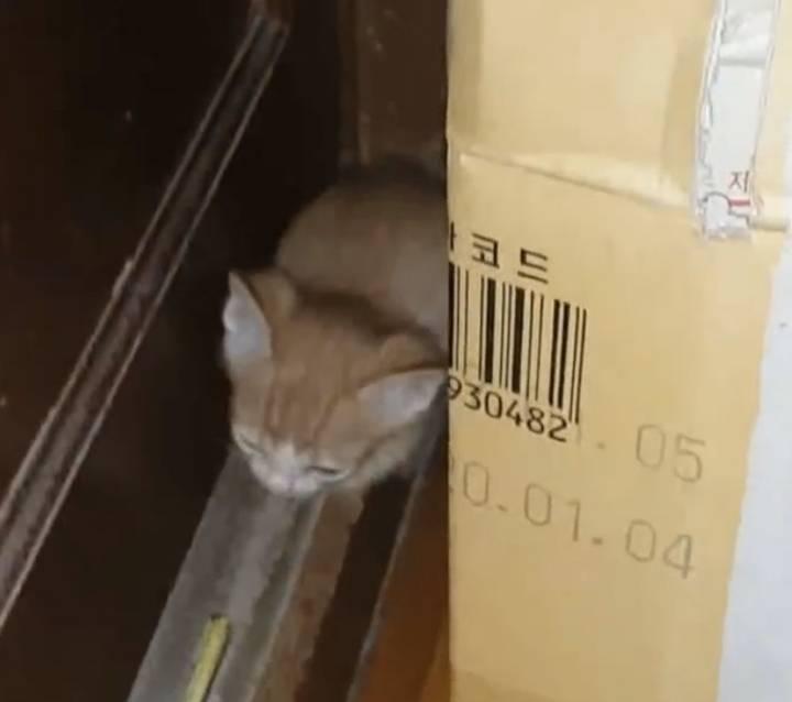 종이컵만하던 막내 새끼 고양이 근황.jpg | 인스티즈